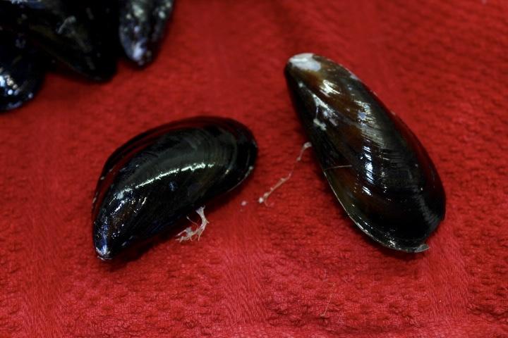 mussel beards