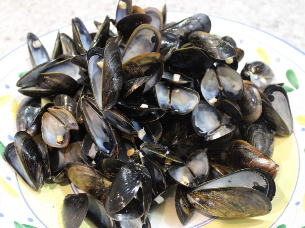 empty mussels shells